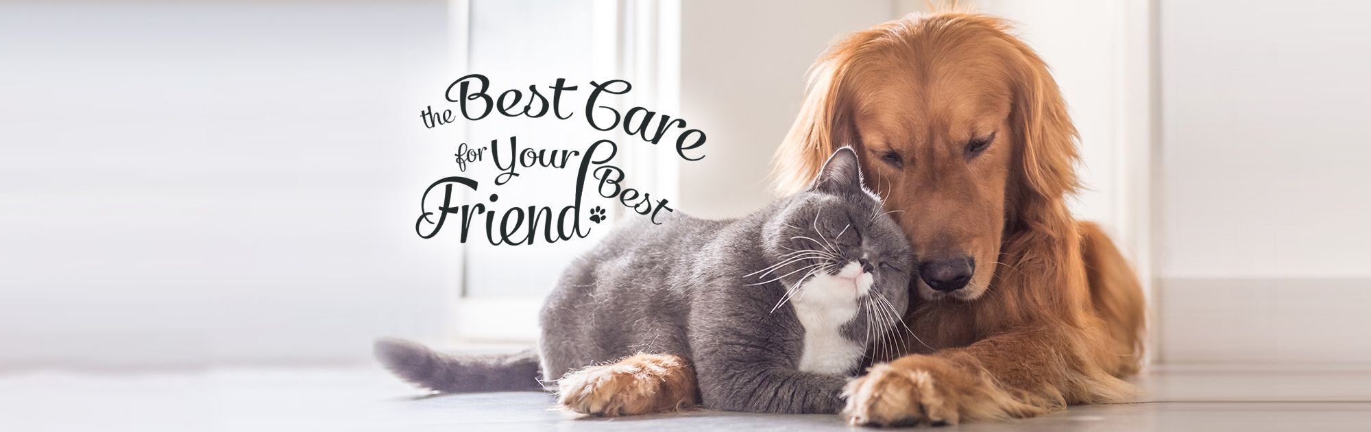 The best care for your best friend
